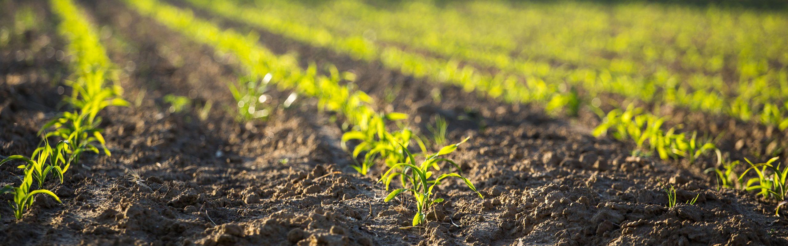 Développer l'agriculture biologique au sein du groupe Terres du Sud