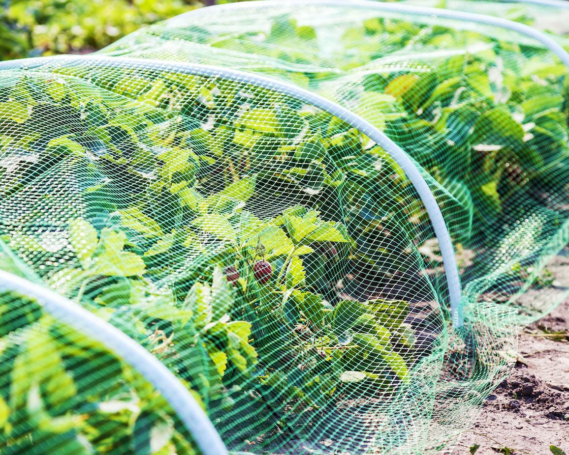 Filet anti-insecte - Biodiversité