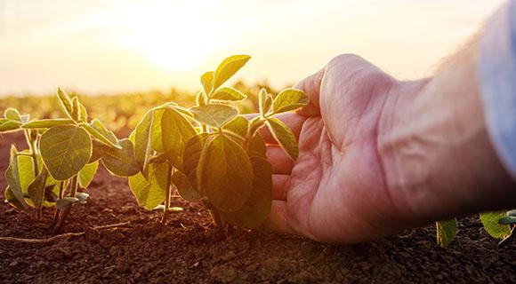 Vision durable et solidaire Terres du Sud