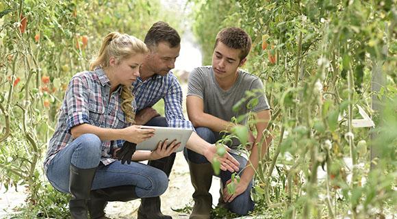 Terres du Sud accompagne les jeunes agriculteurs