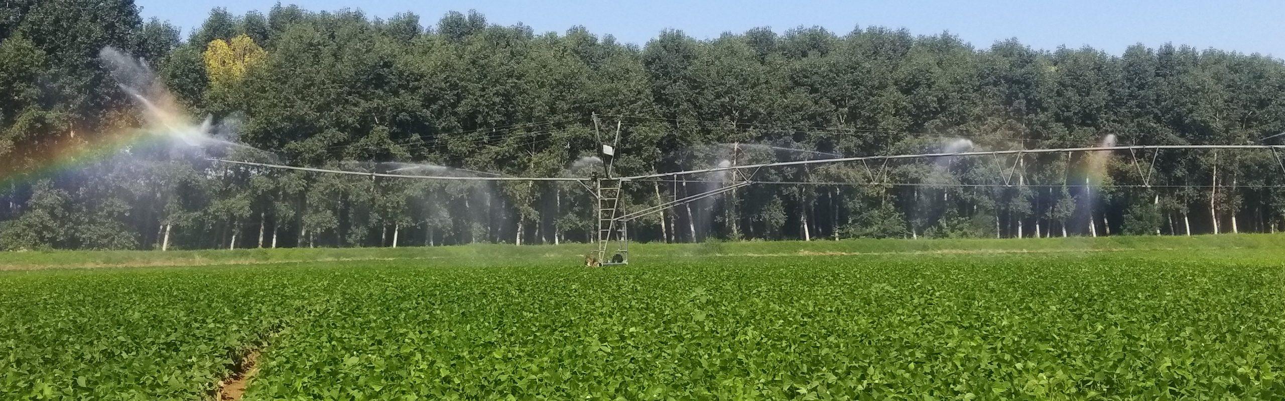 Culture d'haricots verts pour Terres du Sud