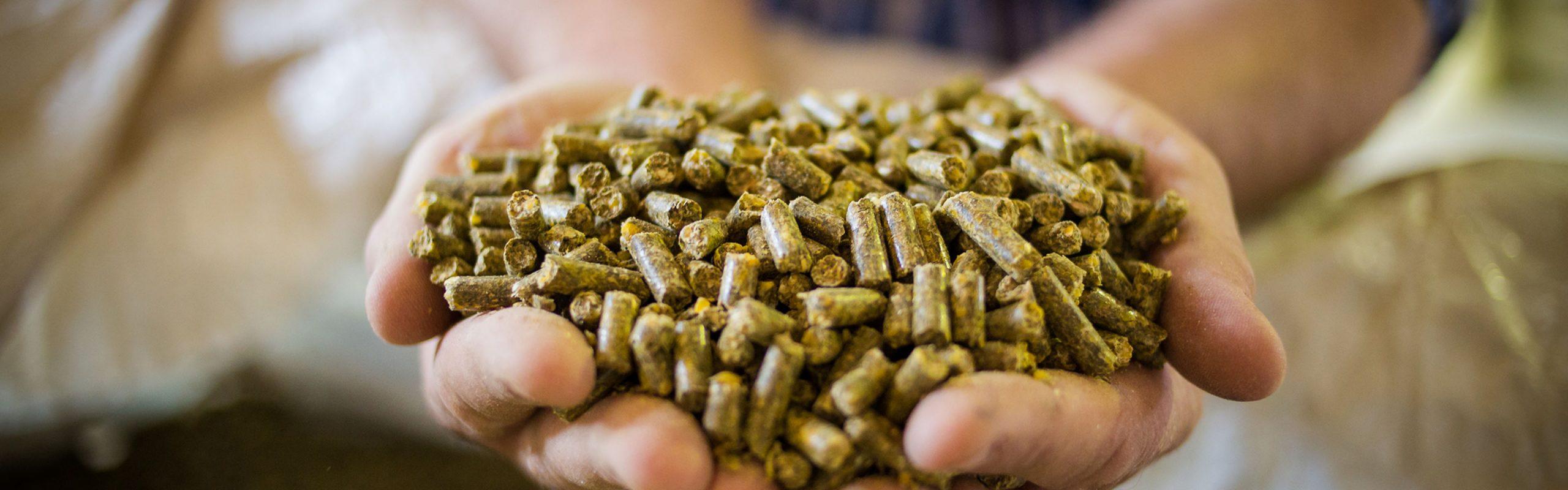 Tourteaux de soja produits par SojaPress, Terres du Sud