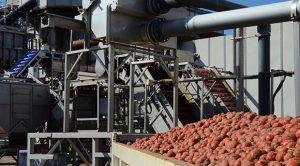 Pleine saison pour les tomates d'Aquitaine, Terres du Sud
