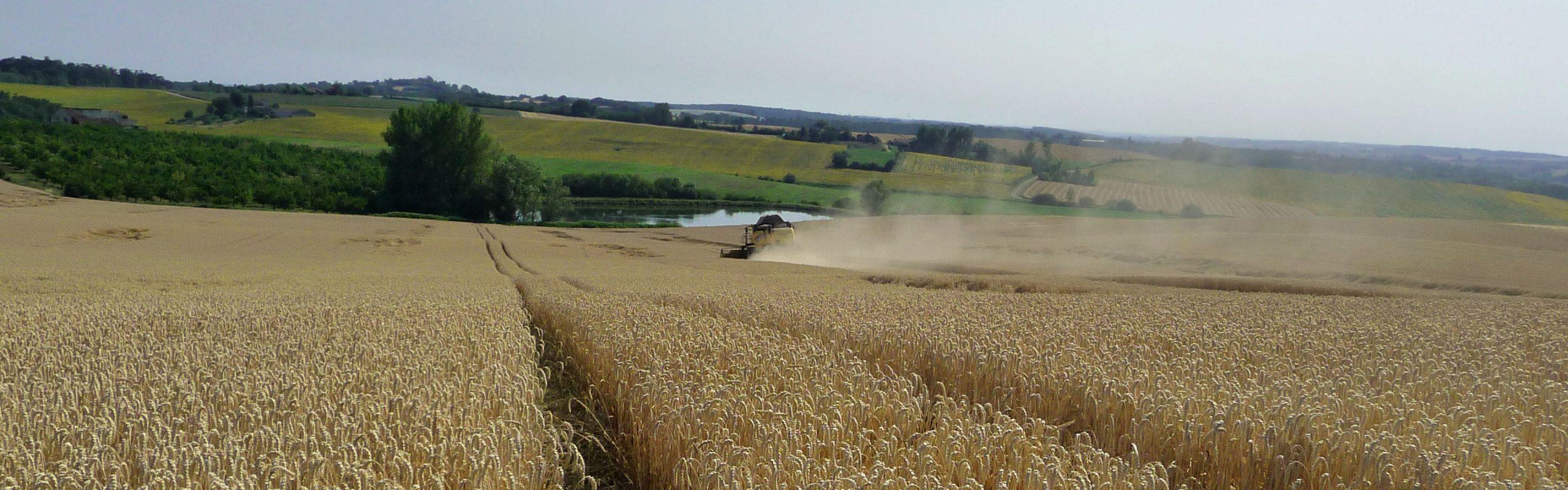 Recolte SDA Négoces avec Agrifeel