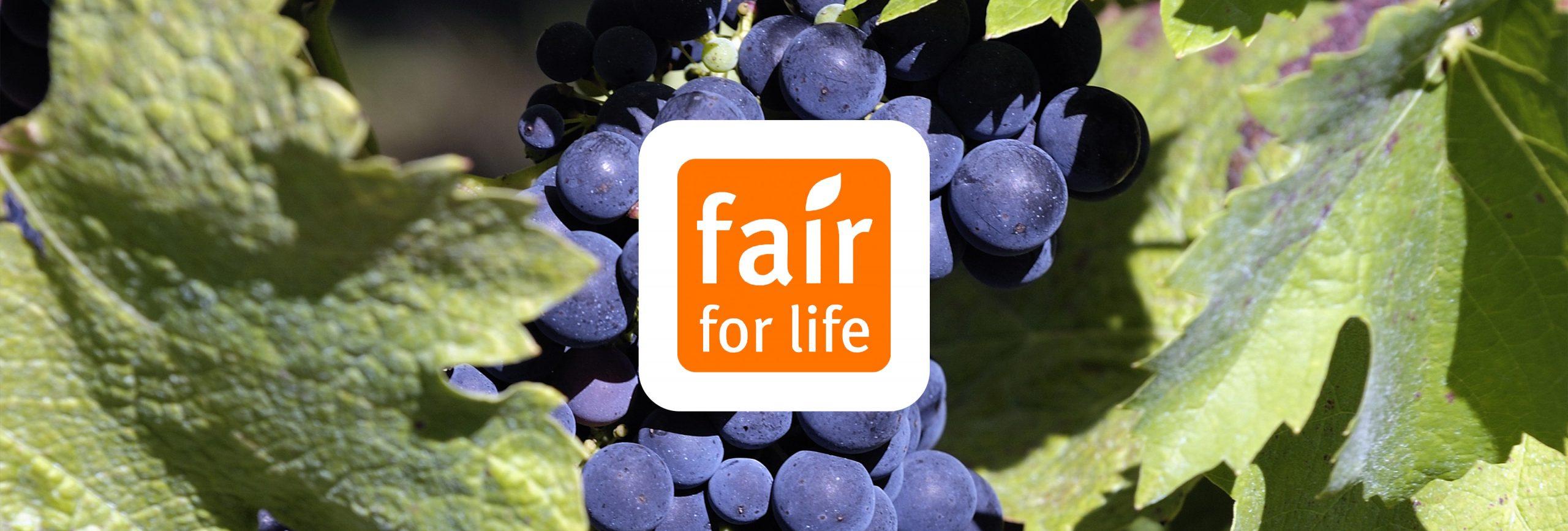 L'attestation Fair for Life au groupe Terres du Sud