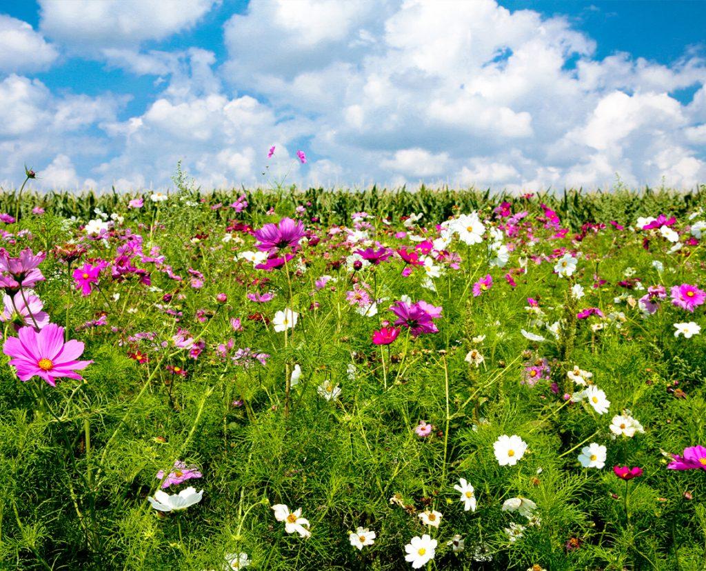 Semaine des Fleurs pour les Abeilles au groupe Terres du Sud